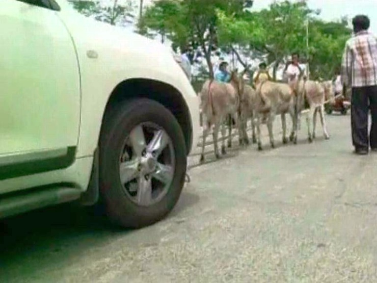 Toyota Land Cruiser pulled by donkeys 2
