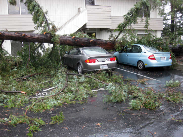 Park car tree