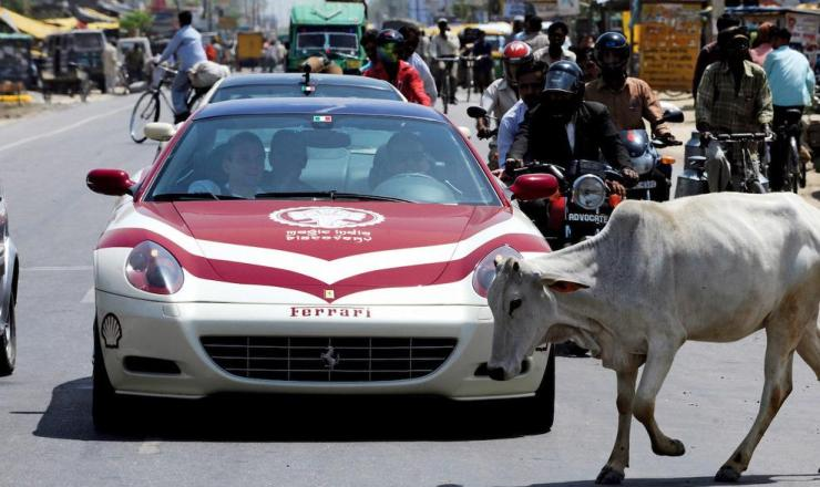 Ferrari in India and cow