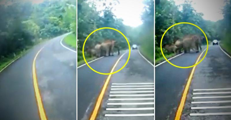 Motorcycle rider runs into a herd of elephants, escapes! [VIDEO]