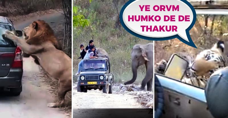 10 'close encounters' with wild animals on Indian roads: Tiger vs Bolero, Rhino vs Ecosport, Lion vs Innova & more!