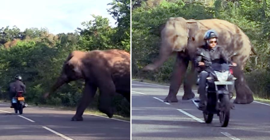 Angry wild elephant attacks Bajaj Discover rider, autorickshaw: Caught on video