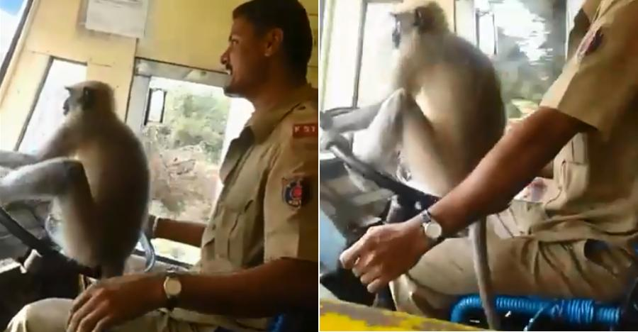 Monkey Driving Bus Featured
