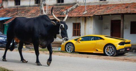 Lamborghini Supercar And Bull Featured