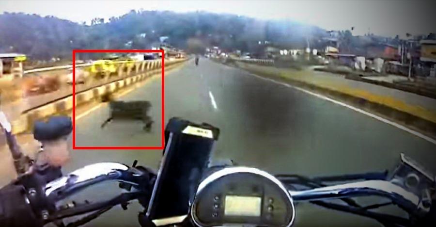 Speeding Goat Featured