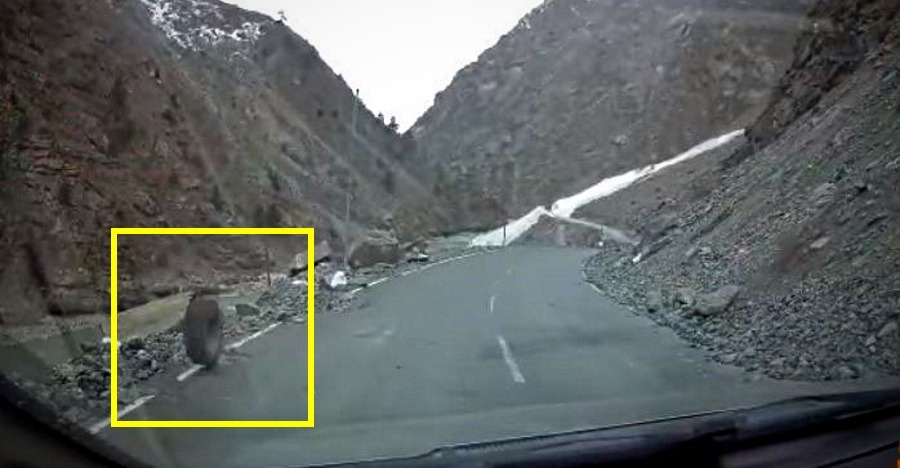 Last thing you want to see while driving on mountain roads [Video]