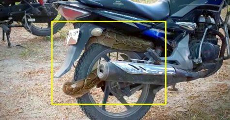 Honda Unicorn Python Featured