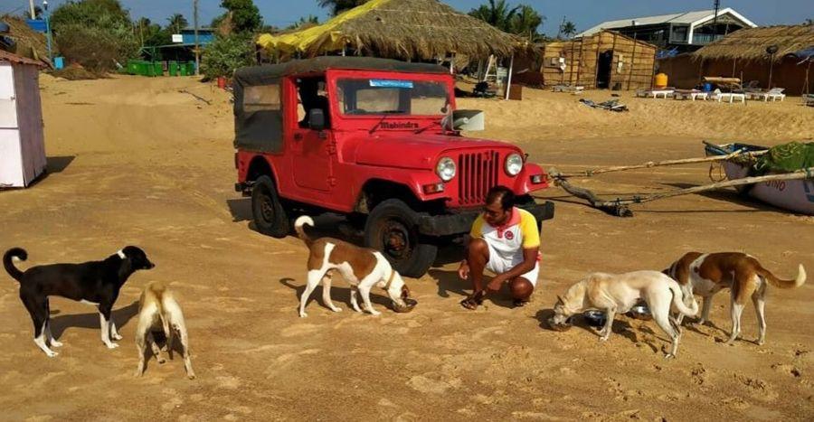 Stray Animals Feeding Mahindra Jeep Featured