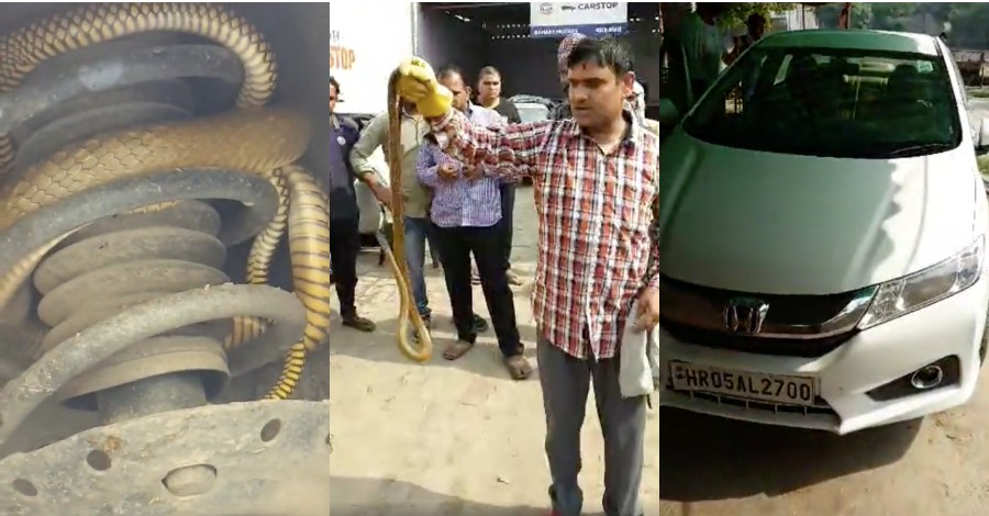 6-foot snake finds shelter inside a Honda City: Watch it getting rescued [Video]