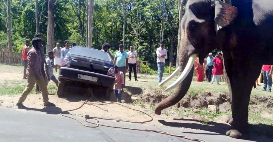 Maruti 800 gets stuck: Elephant to the rescue [Video]