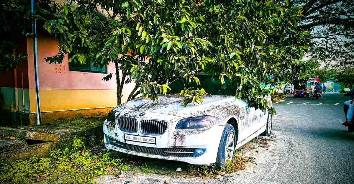 5 rare exotic imports ABANDONED on Indian streets