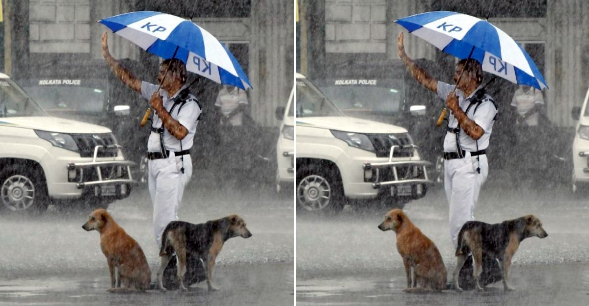 Kolkata Traffic police constable gives shelter to stray dogs under his umbrella in pouring rain: Wins praise