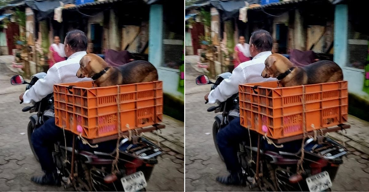 Man transports dog on bike after being denied permission to board bus: Takes 2 days for 4 hour journey